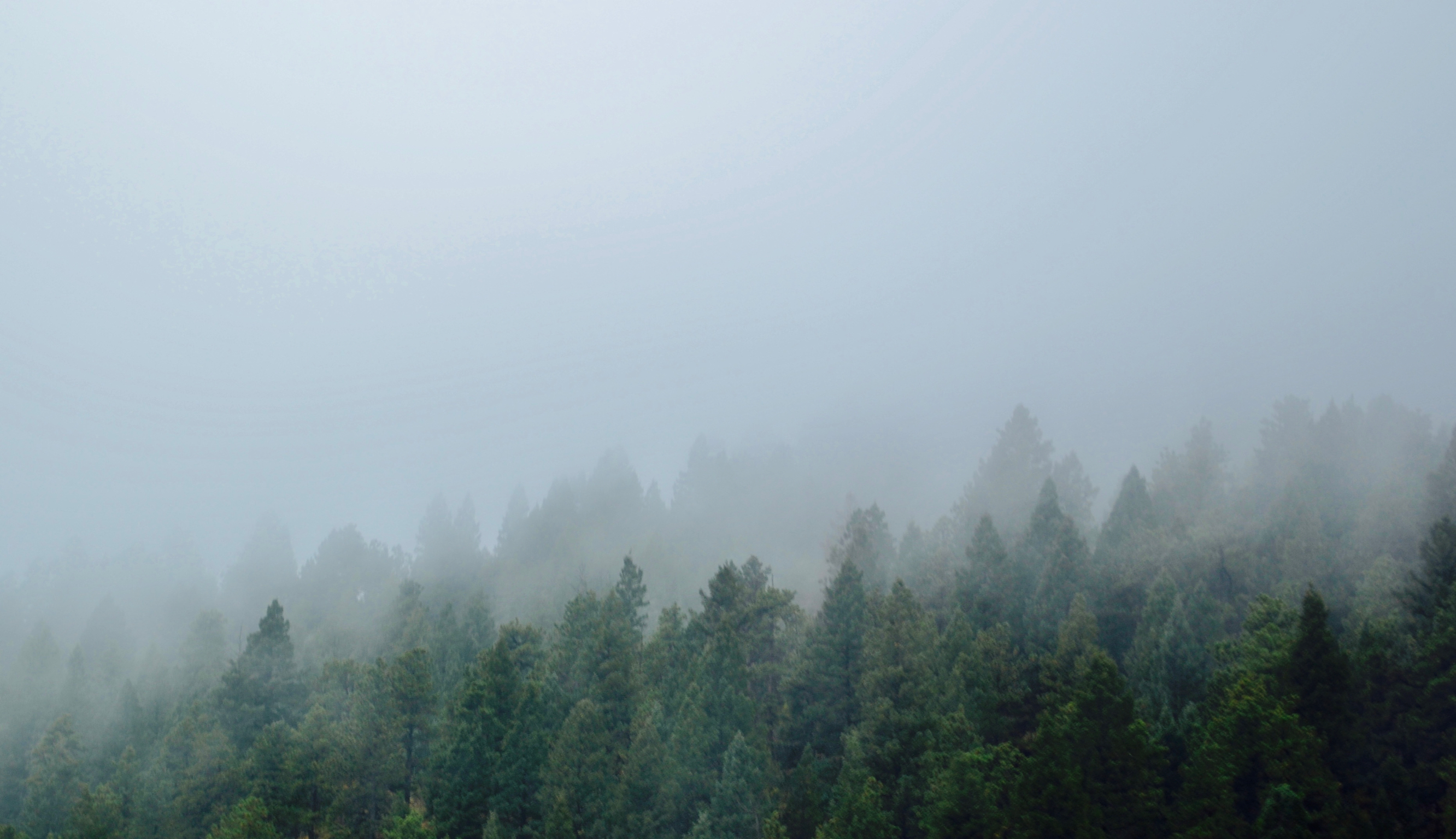 Fog rolling in over the mountain evergreens.