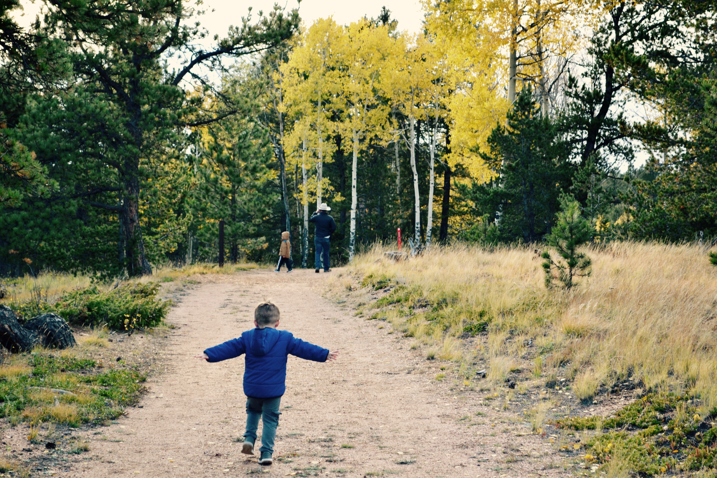 A young child runs down a trail into a grove of yellow aspen trees.